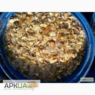 Продам гриби маслята (маслюки) солені. Урожай 2016