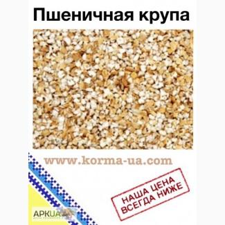Пшеничная крупа (оптом)