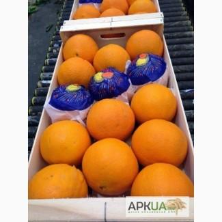 Апельсины. Прямые поставки из Испании