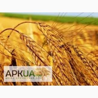 Закупаем пшеницу, Сумы, Пшеница — APKUA e22c41ab703