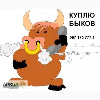 Покупаю быков весом от 100 кг до 500 кг, все регионы! Дорого! Оптом