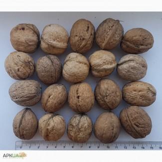 Продаємо волоський горіх (грецкий орех). Великі об єми. Можливий експорт
