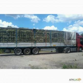 Молодое зеленое сено в тюках 20-30кг. Доставка по Украине. Опт