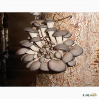 Продам грибы ВЕШАНКИ