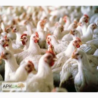 Комбикорм для цыплят-бройлеров ПК 5-4. Возраст от 15 до 30 дней