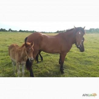 Коні хороші