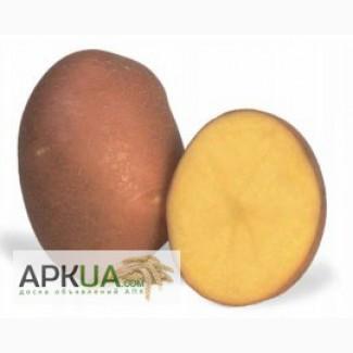 Продам насінну сортову картоплю по Україні