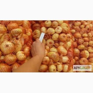 Продам лук (репа) для выращивания на перо Штутгарт ризен