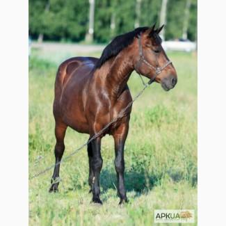Продам роботящую лошадь