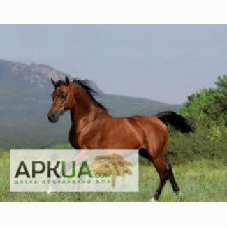 Продам 25 жирных лошадей