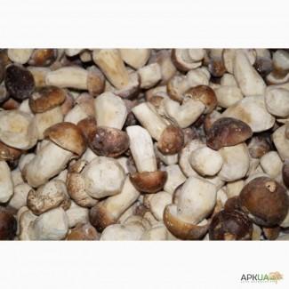 Белый гриб целый 1 сорт