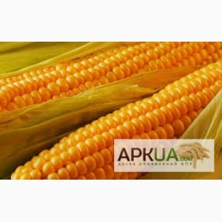 Куплю дорого кукурудзу
