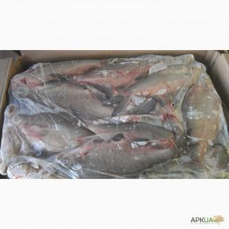 Рыбная компания реализует свежемороженую рыбу оптом