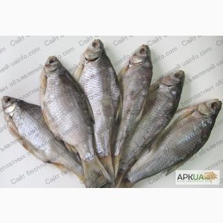 Рыбная компания реализует оптом речную вяленую рыбу от производителя