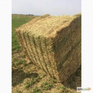 сегодня активно продажа сена в старобачаты можно классифицировать нескольким