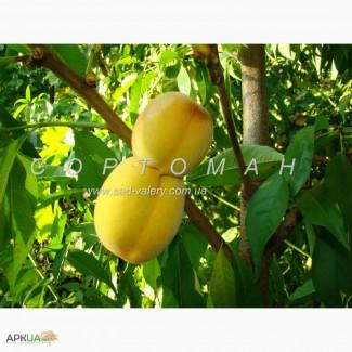 Cаженцы персика, абрикос, сливы, нектарина, черешни, вишни