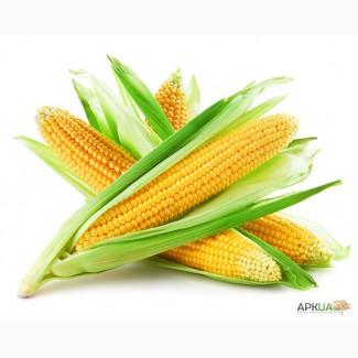 Продам семена кукурузы, гибриды
