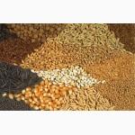 Крупная компания закупает зерновые большими объемами