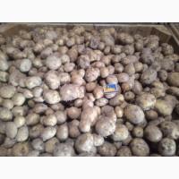 Продам картоплю (соц. варіант)