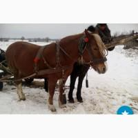 Продам кобилу (лошадь)