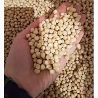 Семена Гороха VERNON, канадский желтый трансгенный сорт продовольственного гороха