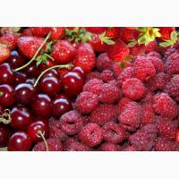 Закупаем ягоды МАЛИНЫ, ВИШНИ, БУЗИНЫ, АРОНИИ, сливу, грушу, абрикос