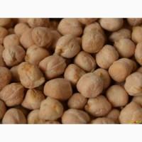 Продаем семена нута сорт Буджак