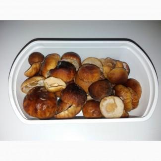 Шапочки білих грибів
