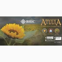 Семена подсолнечника Атилла от производителя