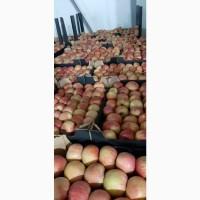 Продам яблоко зимових сортів