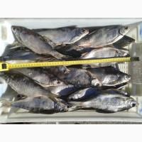 Рыба, раки и морепродукты