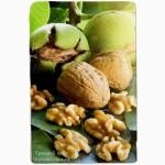 Продаем саженцы грецкого ореха (Сеянцы крупноплодных сортов) | частный питомник LITYNSAD