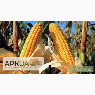 Кукуруза Любава 190 МВ (25 кг)
