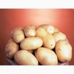 Элитные сорта картофеля