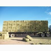 БЕСПЛАТНАЯ доставка сена по Украине. Разнотравье, люцерна в тюках