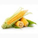 Дорого закупаем пшеницу, ячмень, кукурузу и др. зерновые