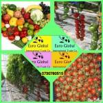 Помидоры огурцы овощи оптом с Турции