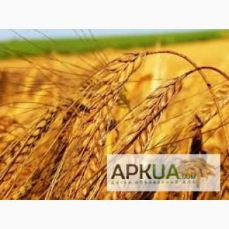 Купим пшеницу по всем Регионам