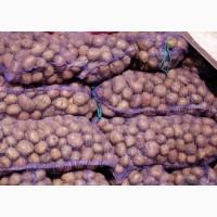 Продажа картофеля на закладку