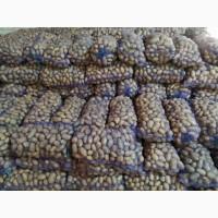 Продам товарный картофель, сорт Королева Анна 2020 г