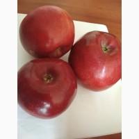 Предприятие реализует яблоки