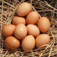 Продам яйце куряче від виробника (с0, с1, с2)