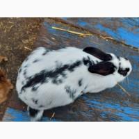 Обмен или продаха кроликов