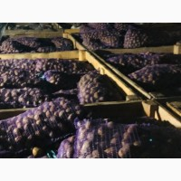 Продам семенной картофель Гранада, Волара