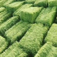 Самая низкая цена на сено в тюках: 60гр 17-24кг вместе с доставкой