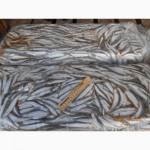 Купить анчоус хамсу свежемороженую СРТМ-к оптом Крымское качество доступные цены
