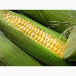 Куплю по Луганской области кукурузу