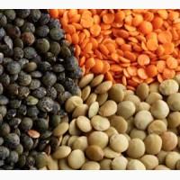 Покупаем органическую продукцию : жмых, шрот, чечевицу, пшеницу, нут