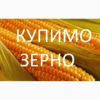 Компанія купить дорого кукурудзу по Берегівському районі