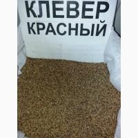 Продам семена клевера красного